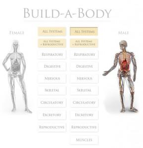 Build a Body