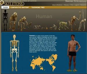 ESkeleton